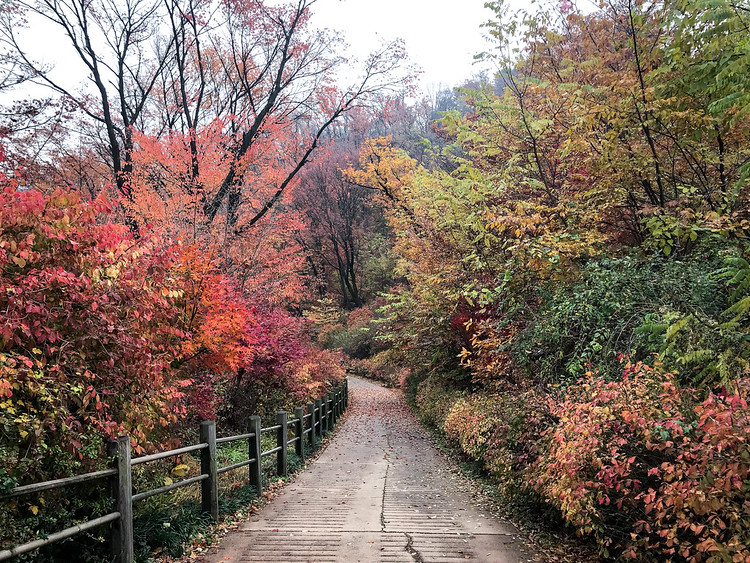 Autumn in Namsan, Seoul, Nov 2018